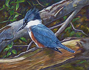Kingfisher by Lesley Heathcote