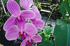 Photo of orchids by Naima