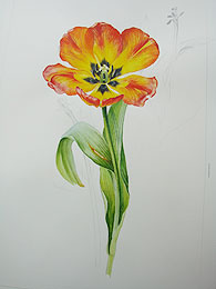 Roz's Tulip by Susan Bull Riley